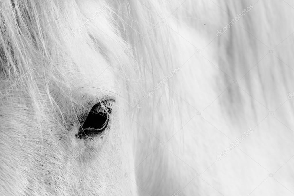Detail of a white horse