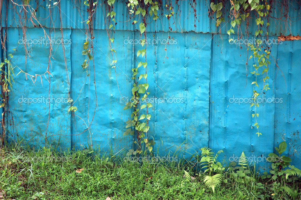 Old blue iron wall with creeping weeds