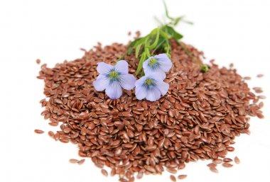 Linum usitatissimum - common flax
