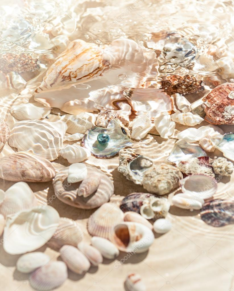 seashells lying on sea bottom