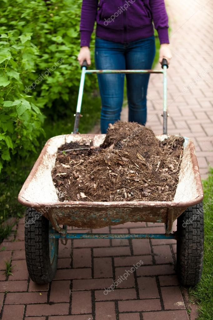 photo of woman holding wheelbarrow with soil