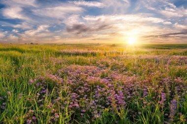 Flower meadow on sunrise