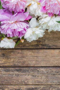 Peony on rustic background