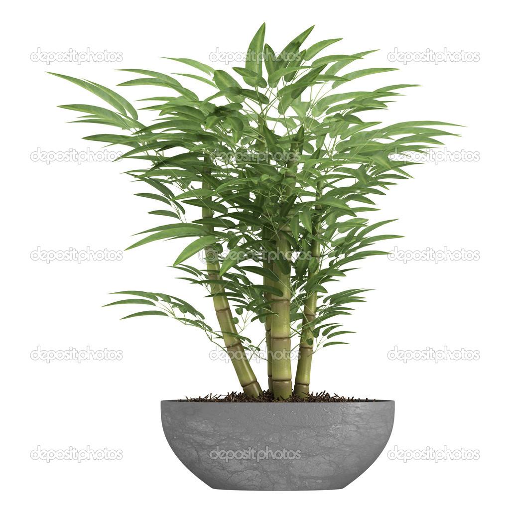 Dekorative Bambus In Einem Container Stockfoto C Nmorozova 13699364