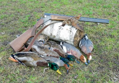 trophy hunter. ducks, woodcock and hunting rifle.