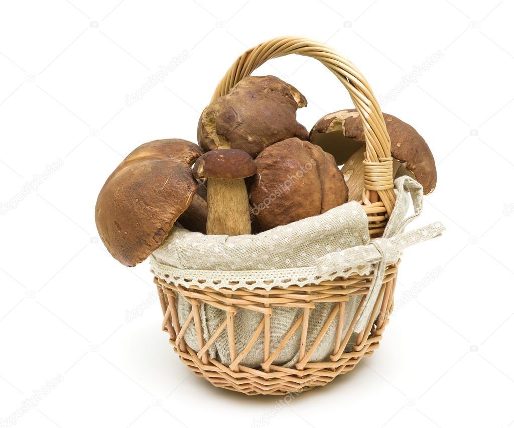 Фото грибы в корзине. Лес белые грибы в корзине на белом ...