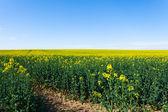 Fotografie Fields in bloom