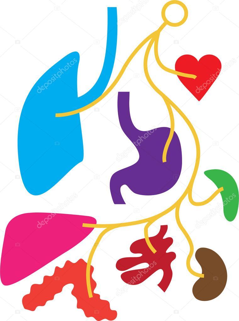 einfaches Nervensystem menschlicher Organe — Stockvektor ...