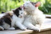 Katzenmutter wäscht ihr Kätzchen