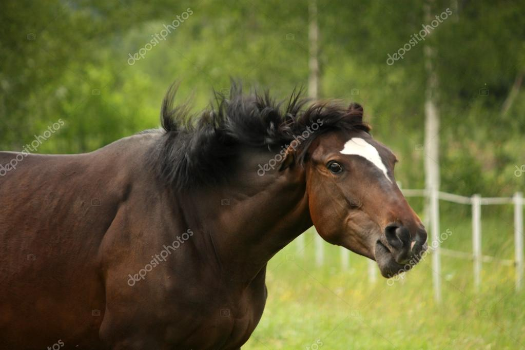 Brown horse shaking head