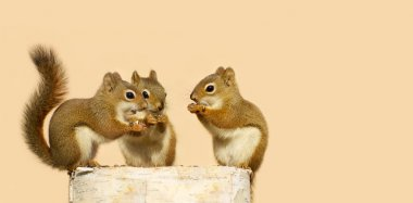 Baby squirrels sharing.