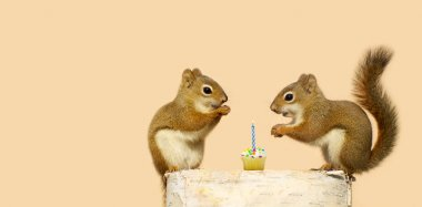 Birthday Squirrel.