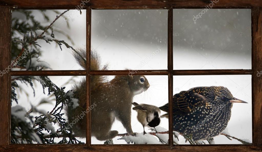 Animaux Drôles Dans Une Tempête De Neige, Vue À Travers La Fenêtre