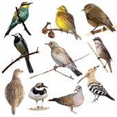 Fotografia impostare uccelli isolati su sfondo bianco, trama