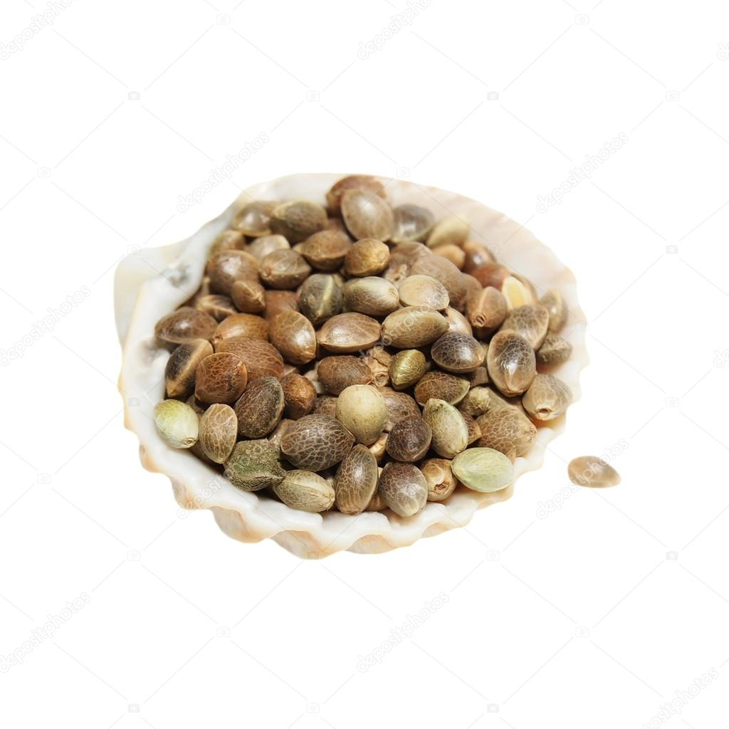 Hempseed in shell isolated on white background