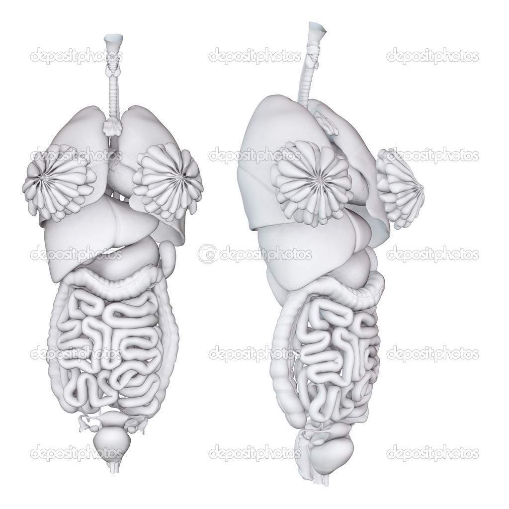 Frau Anatomie — Stockfoto © greglith #16963001