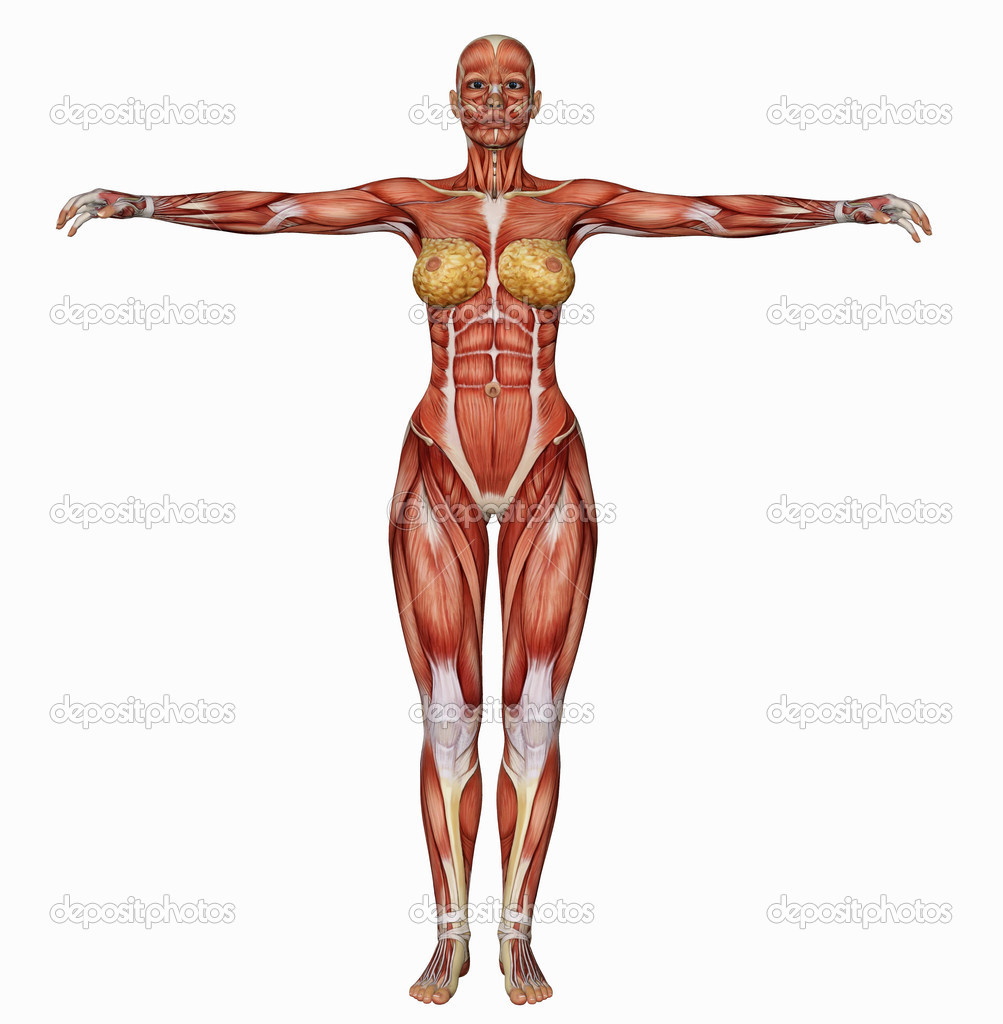 female body's muscle structure from behind — stock photo, Muscles