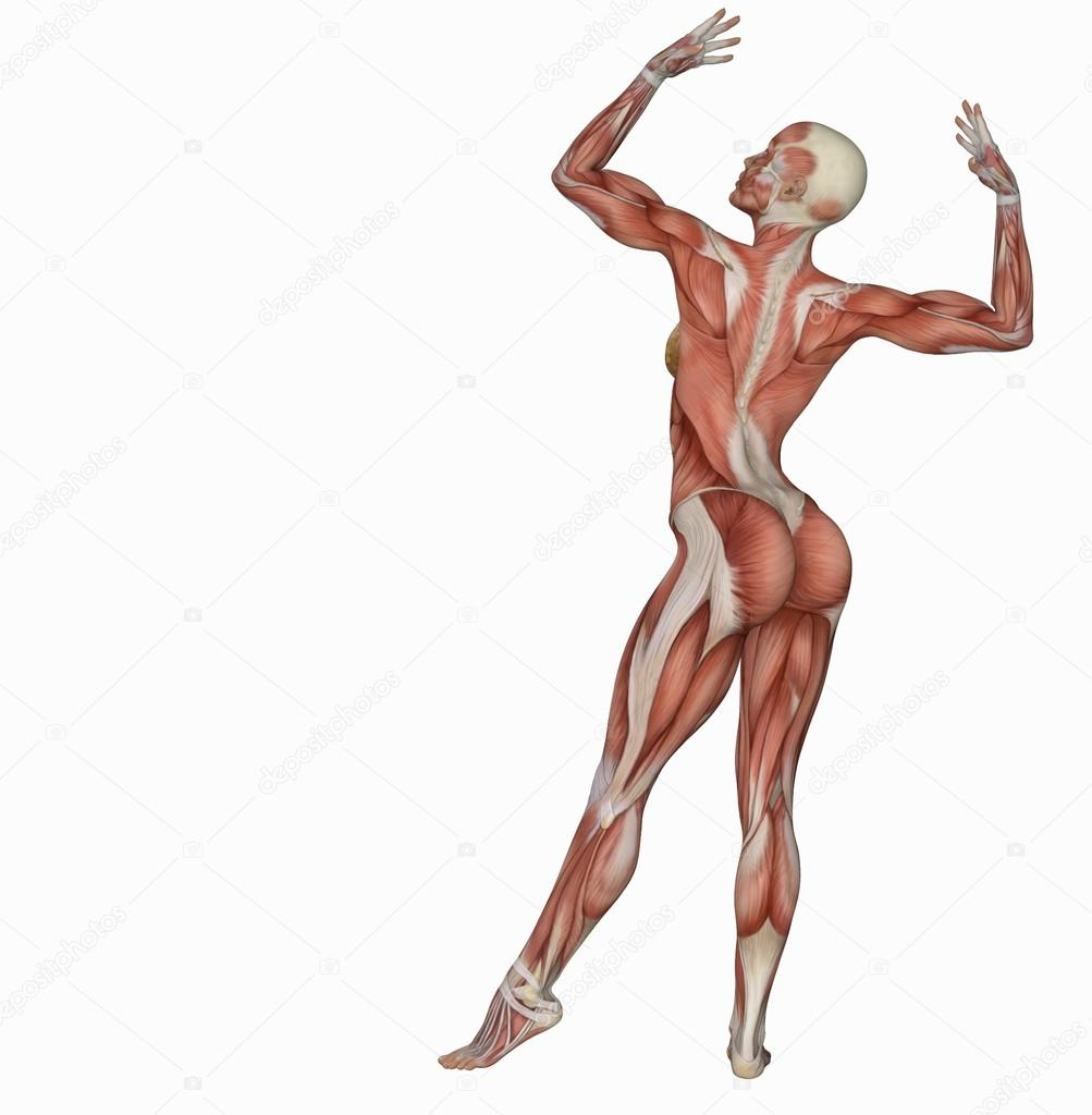 female body's muscle structure in body builder pose — stock photo, Muscles