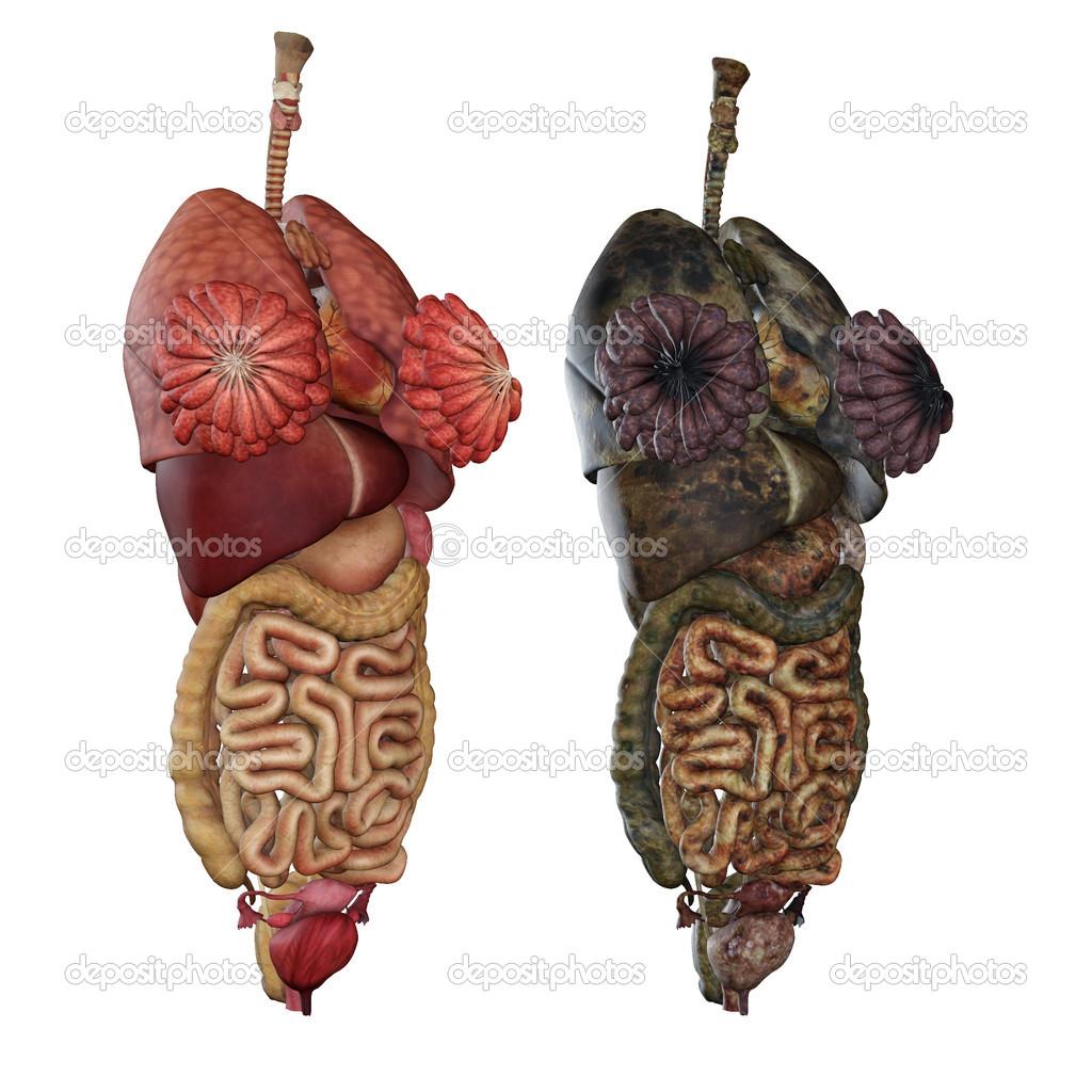 isolierte männlichen Anatomie-Studie — Stockfoto © greglith #17680217