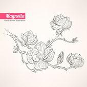 kvetoucí magnólie
