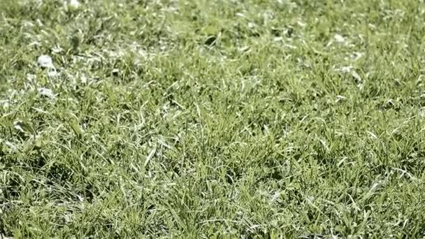 míč na trávě 7