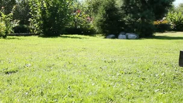 lopata na trávě 1