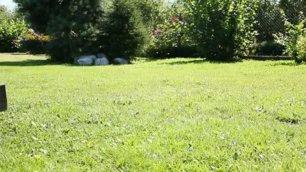 lopata na trávě 2