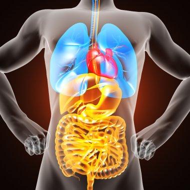human entrails radiography