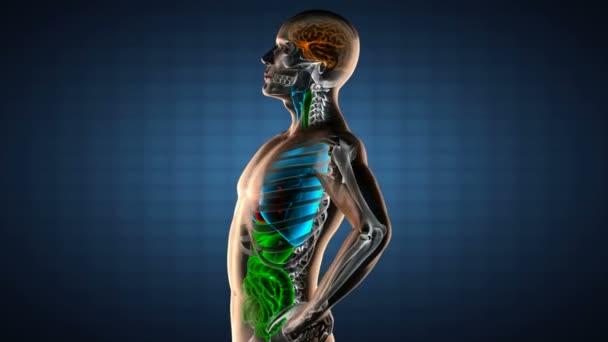 lidská střeva radiografii skenování