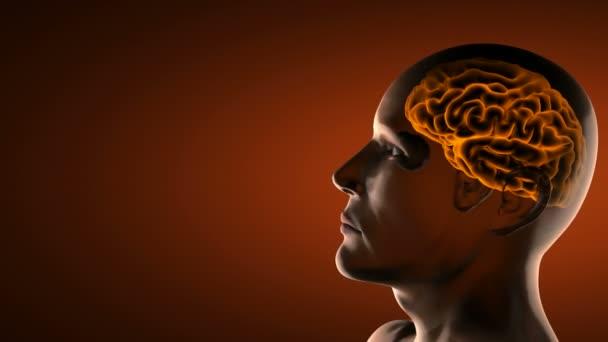 smyčky lidského mozku radiografie