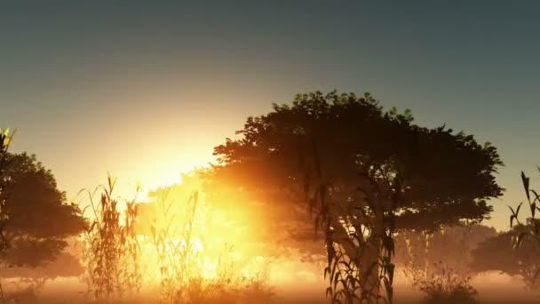 Fog, zářící slunce a stromy