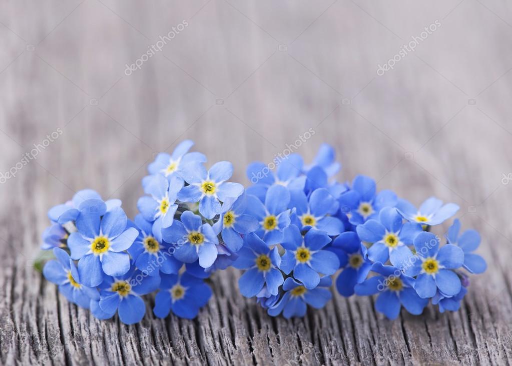 Forgetmenot flowers