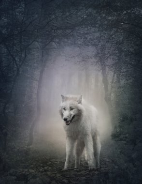White wolf in the night forest stock vector