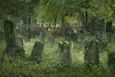 Old jewish cemetery in Vienna stock vector
