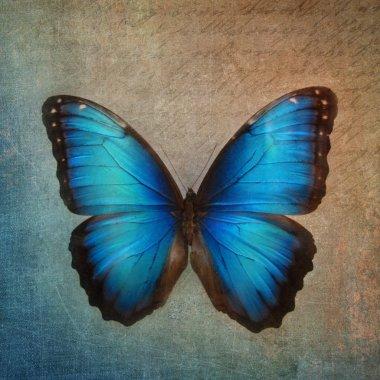 """Картина, постер, плакат, фотообои """"винтажный фон с бабочкой маслом картина пейзаж портрет закат собор лесу"""", артикул 33012603"""