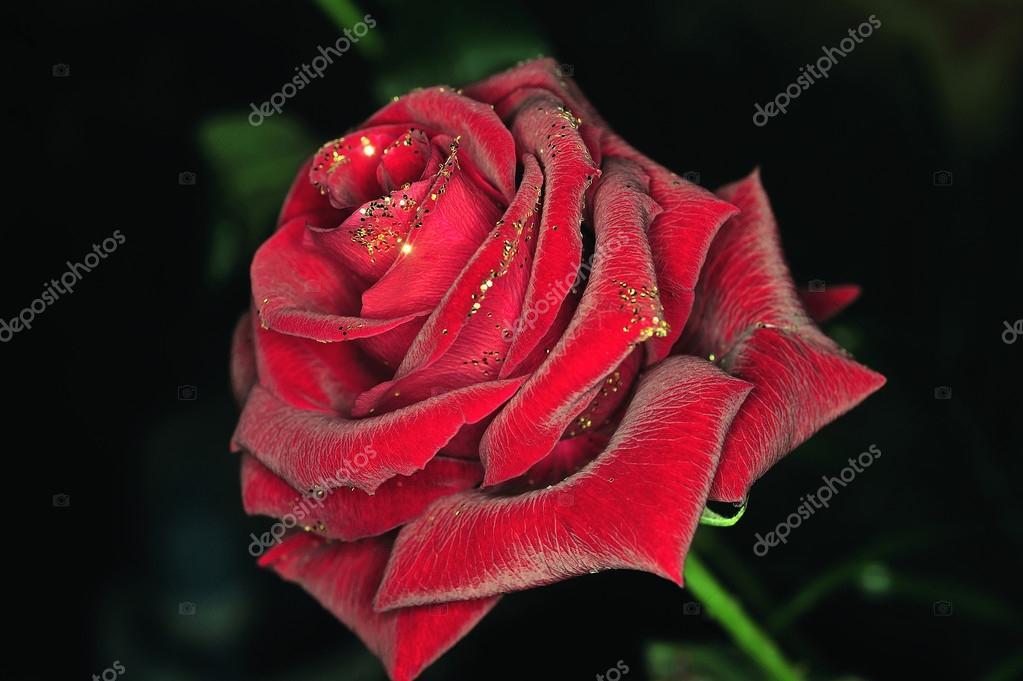 Fotografie Nero Con Fiori Glitter Una Rosa Con Glitter Su Sfondo