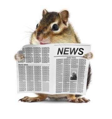 Funny chipmunk read newspaper
