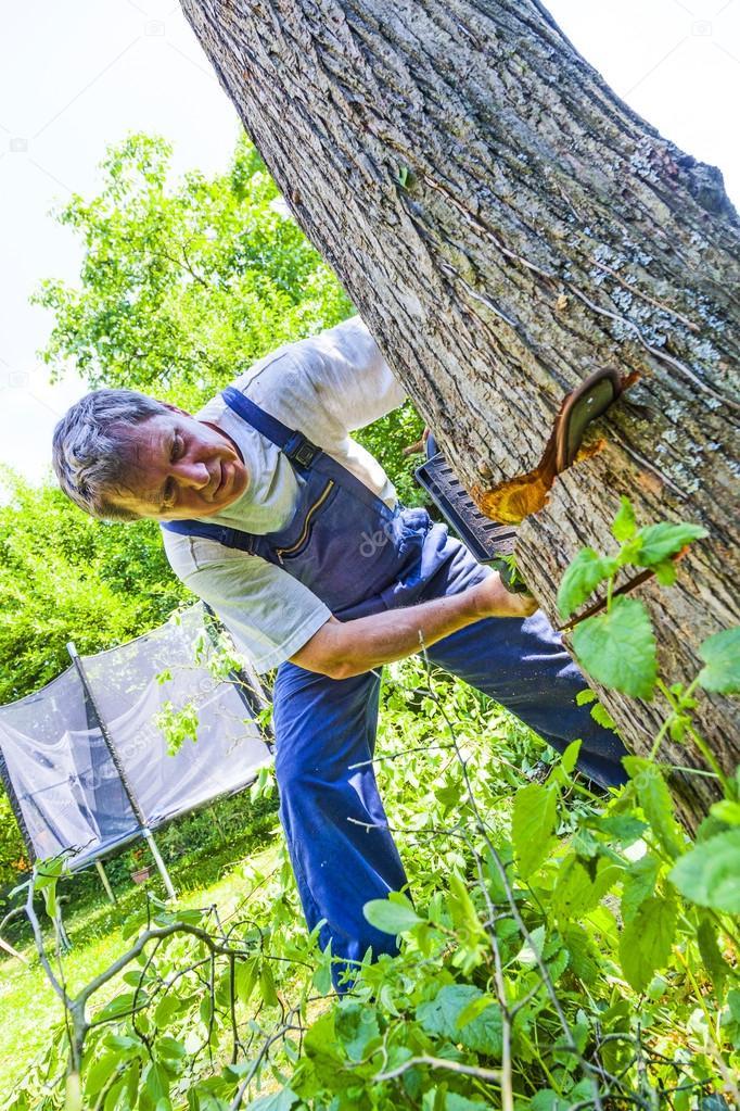 Hombre cortar un rbol con una sierra fotos de stock for Sierra de cortar