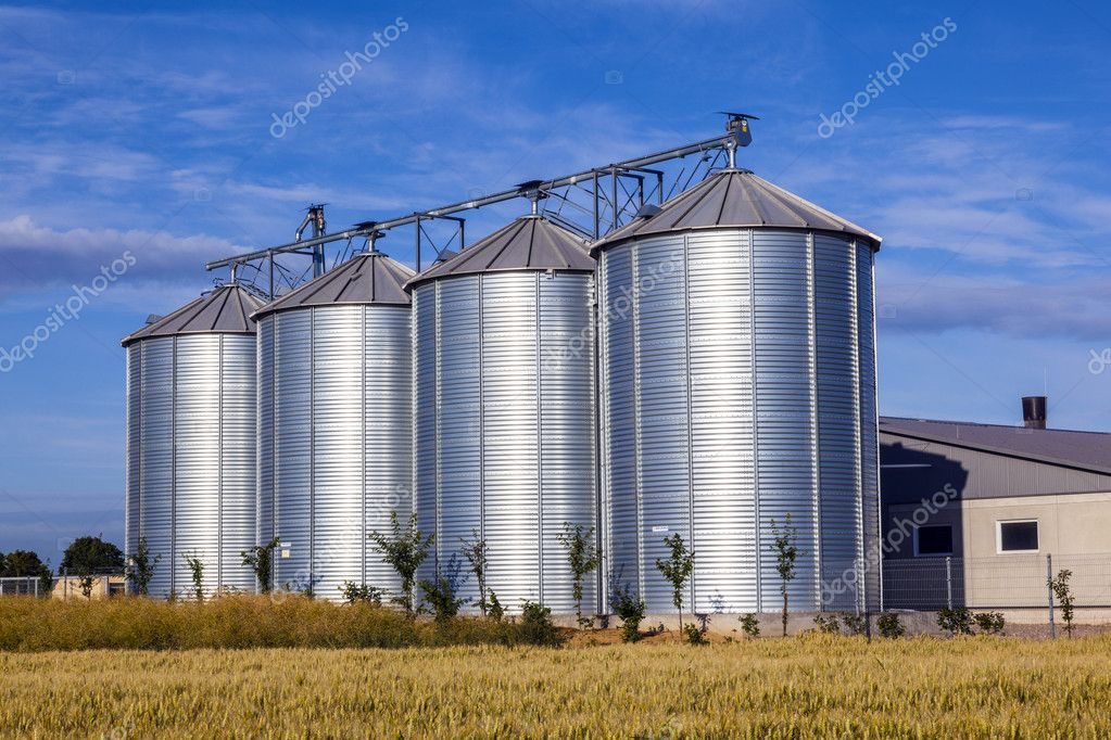 Four silver silos in corn field