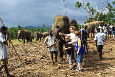 """Картина, постер, плакат, фотообои """"дети обнимаются со слонами в лагере в джунглях """", артикул 18187829"""