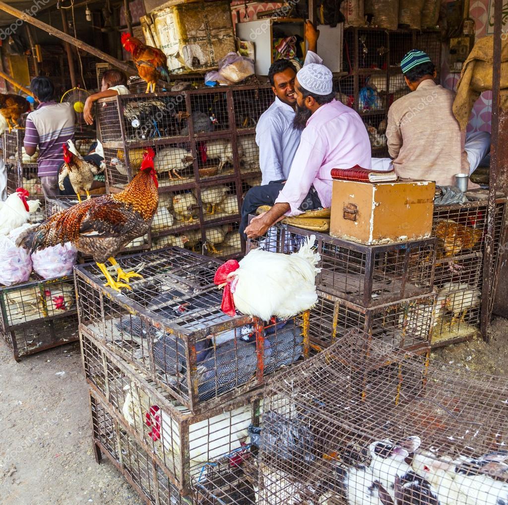 Μεγάλο ινδικό στρόφιγγες