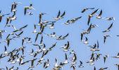 stormo di uccelli sotto il cielo blu