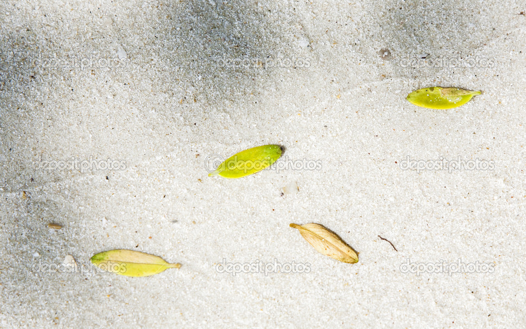 beach with arrangement of leaves