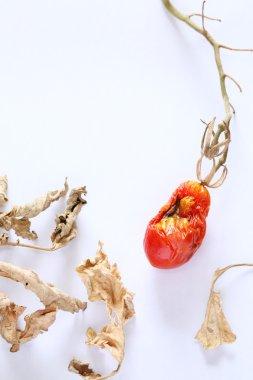 Dried cherry tomato