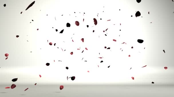 Rose petals in a white room falling on the floor,nice shadows on the ground