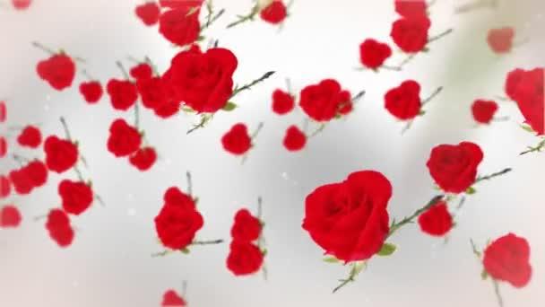 Rosen gegen Weiß