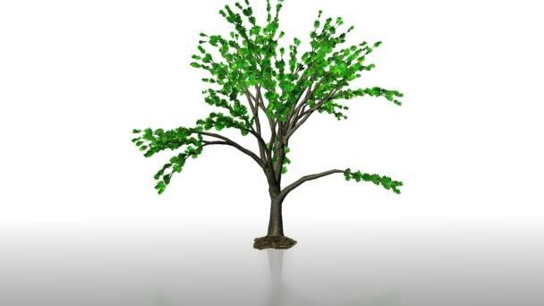strom, který roste time-lapse s pozemní reflexe, alfa součástí