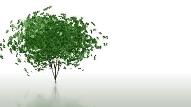 strom, který roste time-lapse s listovým, pádu, alfa součástí