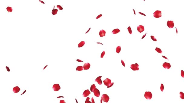 Rose petals Flying