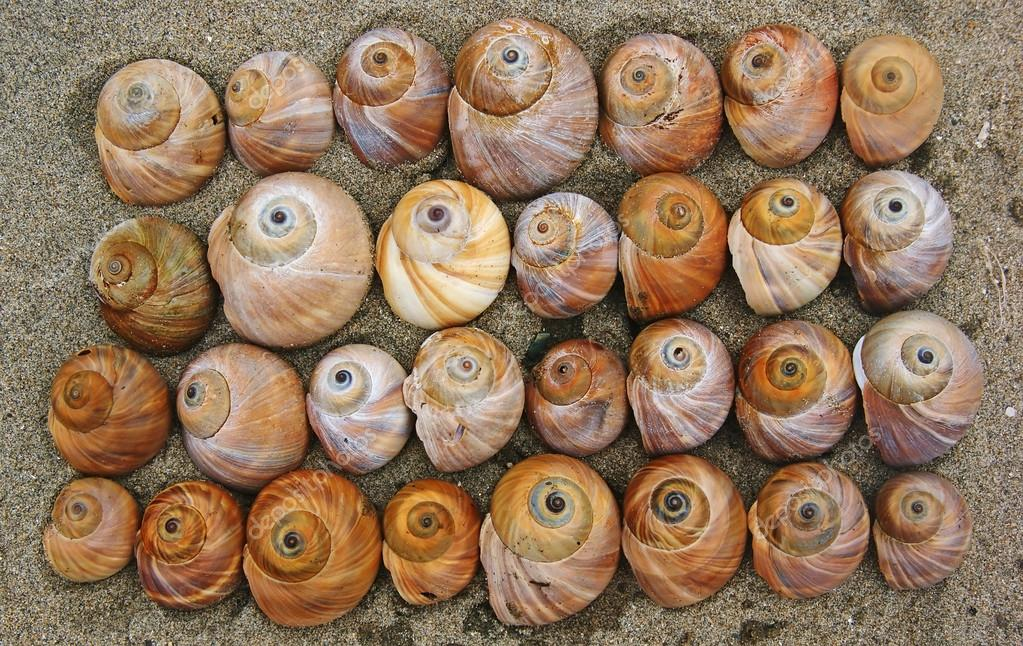 The shells of snails in the sand.